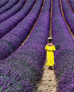 A Fragrant  Walk, Provence