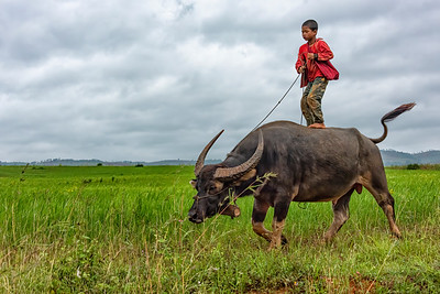Burmese boy and his Water Buffalo