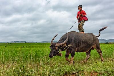 Burmese boy and his Water Buffalo