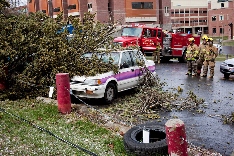 This tree was blown down on Greek Row at the Univeristy of Idaho between Delta Tau Delta and Phi Kappa Tau.  It smashed two cars (one worse than the other) and took down some power lines.  Both the cars belonged to Shari Marquart of Phi Kappa Delta (I think).