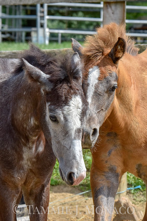 Cutest Foal Contest Entries 2018