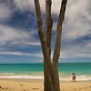 Tree on Waimanalo Beach