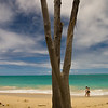 Tree on Waimanalo Beach