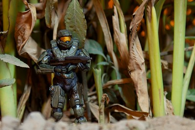 Day 289 -Master Chief is protecting the desert of Africa as he hunts bad guys.  Thanks Mark Moss, formally known as Senior, for the action figure.  I finally got around to photographing him. -JUNE 21