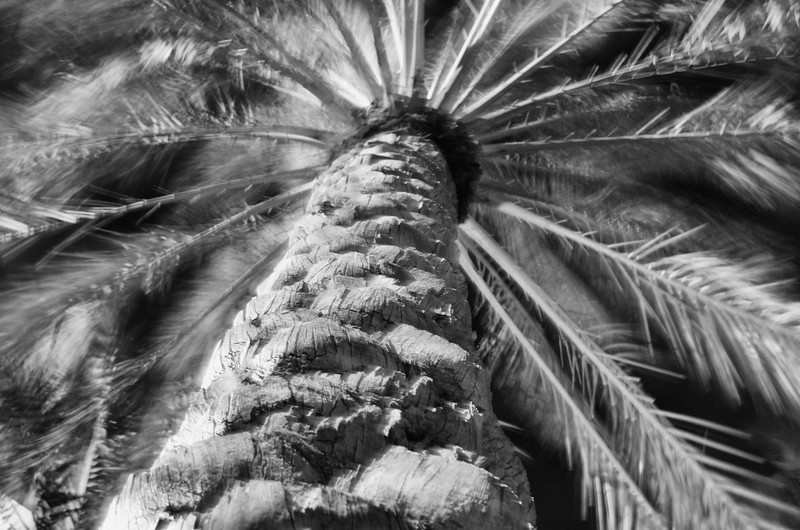 Day 178 -Having a very relaxing night off base at a beautiful hotel.  Out walking around and grabbed this interesting angle of a palm tree blowing in the breeze. -MARCH 2