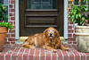 Abbey Dog - July 2013