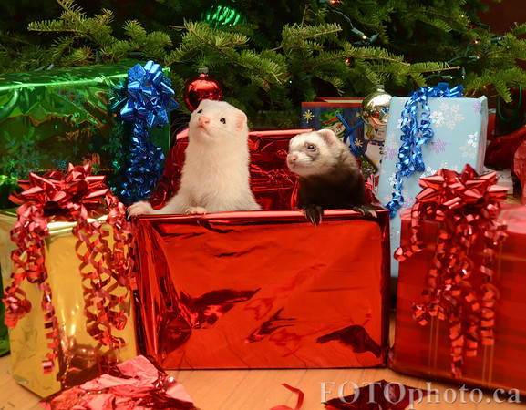 Merry Christmas from your little guys!