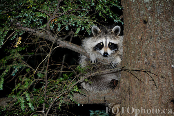The next time you hear a strange noise while alone in the woods, look up. Someone may be watching.