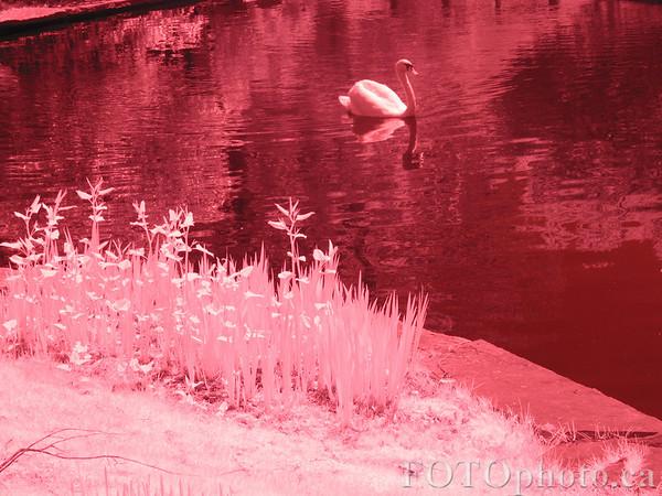 Neon swan.