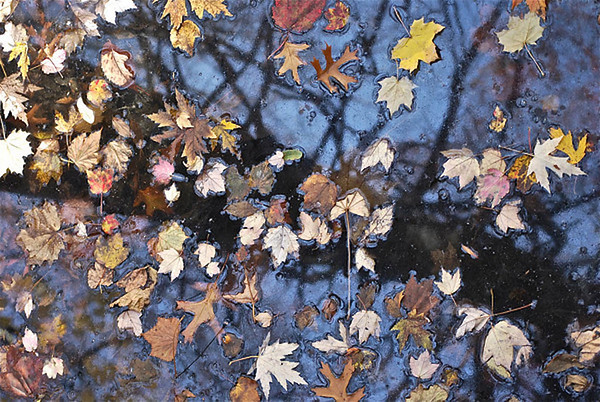 Leaves on Teaneck Creek