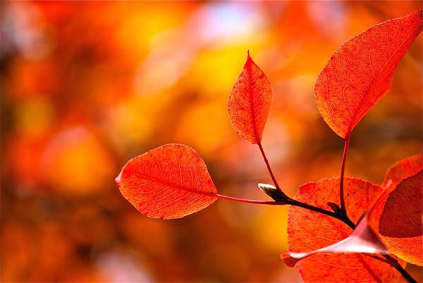 Taste of Fall (c) Daniel Yoffee