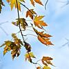 Fall Flavor (c) Daniel Yoffee