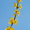 Yellow Gold (c) Daniel Yoffee
