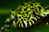 Dart Frogs & Such : 1 gallery with 43 photos
