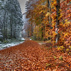 "Fresh Snow on Germany's Back Roads<br /> On our tour through Germany on the ""Romantic Road"" trip, I found myself wanting to get as far off the beaten path as possible, so we would veer onto dirt farm roads and drive through the blazing colors of autumn. When the snow started coming down, it set a whole different mood. The mix between fall and winter was quite exuberating.   I would walk the snowy roads, shooting at every turn, while my wife drove in the car, following behind. She didn't get out of the woods without getting a few snowballs thrown her way!<br /> <br /> What I found interesting about this photo, was two separate scenes stuck side-by-side. Winter on the left, Autumn on the right. Crazy!"