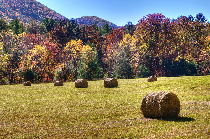 Autumn Hay Fields in West Virginia<br /> I love to just get on a plane, sometimes not much planning in advance, rent a car and then go wildly and freely into the country. I watched the Internet for peak season in West Virginia this year, so to best plan a fly back and take advantage of changing colors of fall. West Virgina is a great place for leaf-peeping. This country road was blazing with color, so I got off the Freeway and just let it take me into the hills. No traffic, no people around, just the horses, cows and me. So Happy Thankgiving to you all, and may we gives thanks for our blessings, and help those less fortunate then ourselves.
