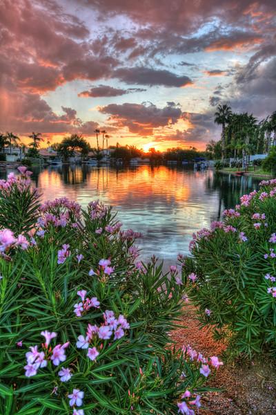 Oleander Sunset in Arizona
