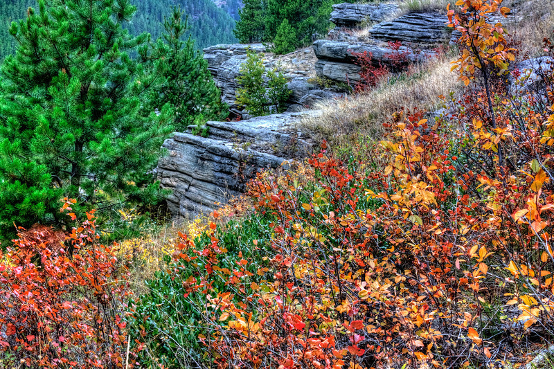 Autumn in Utah on the Virgin River<br /> Since we are getting into fall hear in the U.S., I thought I would share some fall photos for the next few days. I'm preparing to head out to Yosemite National Park, and if all goes well, I can stay in touch, when I can find Wi-Fi in the mountains. It's kind of iffy, but we'll see.