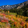 Lower Cotton Canyon-Fall Foliage, Utah<br /> There was a blanket of snow that had fallen overnight in this canyon. I took off up the canyon hoping to get some snow in the photos. It was melting fast, but fortunately I was able to get some in the photos I took. The colors of fall were vivid in Utah this paricular year and I had a blast traveling up and down each canyon looking for the shots. Usually you think of back east when it comes to fall colors, but Utah gives them a run for their money.