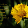 All Men Are Like Grass<br /> And Their Glory Like<br /> The Flowers Of The Field;<br /> The Grass Withers<br /> And The Flowers Fall But<br /> The Word of the Lord Stands Forever.<br /> 1 Peter 1:24