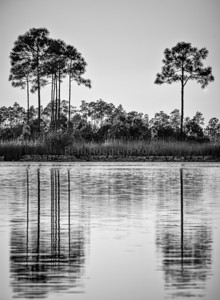 Pineglade Lake, Everglades
