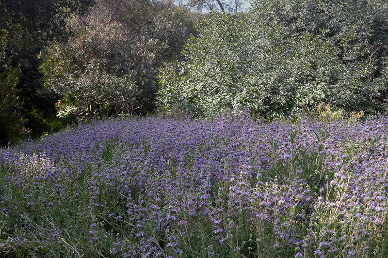 A field of blue and purple flowers