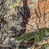 Zion Canyon On The Virgin River