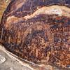 Rochester Petroglyph Rock Art Panel - Utah