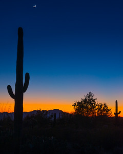 Saguaro Cactus Sunset - Tucson Mountain Park - Tucson, Arizona