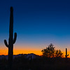 Saguaro Cactus Sunset - Tucson Mountain Park - Tucson, Arizona