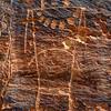 Mckee Springs Petroglyph - Utah