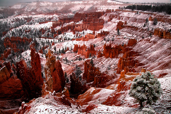 Snow in Bryce Canyon National Park