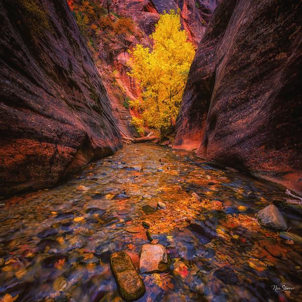 Kanarraville Canyon Fall Colors