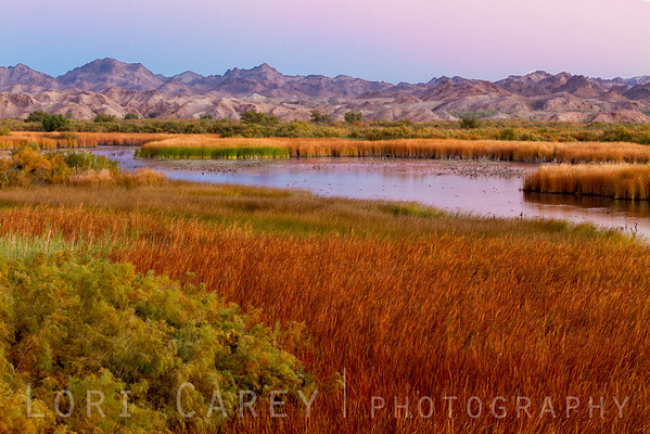 Dawn at Taylor Lake, Picacho State Recreation Area