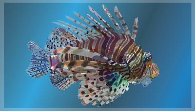 Fishy copy