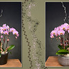 2 orchids in container...$135