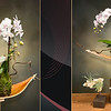 #9 - Floating Art with Kokedama Moss Ball - $250  This is a Preorder.