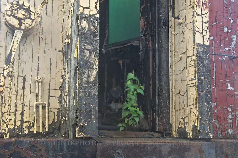 Steamtown Passenger Coach: a plant grows in the doorway