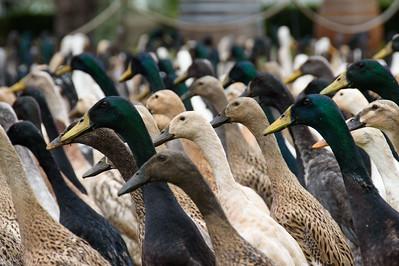 Duck Stampede 3