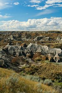 Dinosaur Provincial Park, 2007