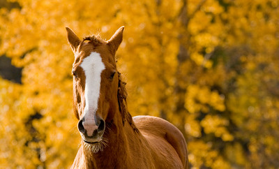 Horse with Fall Colours, British Columbia, Canada, 2007
