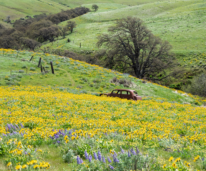 Old Car and Wildflowers