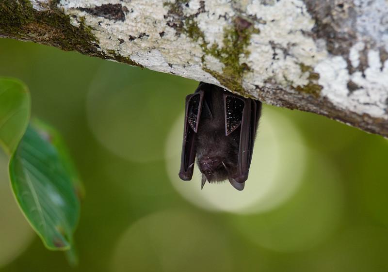 Bat on the Beach