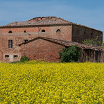 Buildings and Yellow Flowers