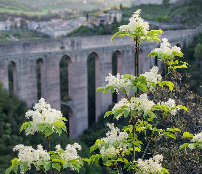 Blossoms and Bridge
