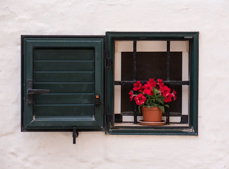 Flower Pot in Window