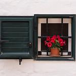 Flower Pot in Window