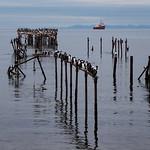 Cormorant Dock