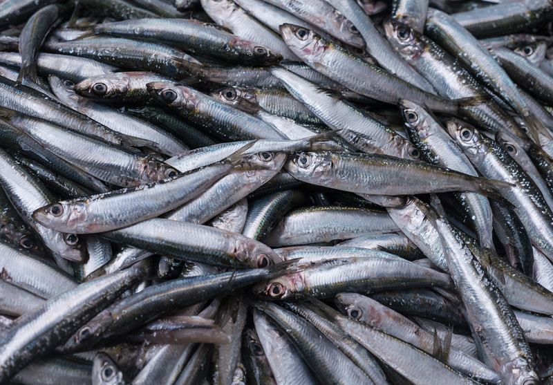 Sardines at the Market
