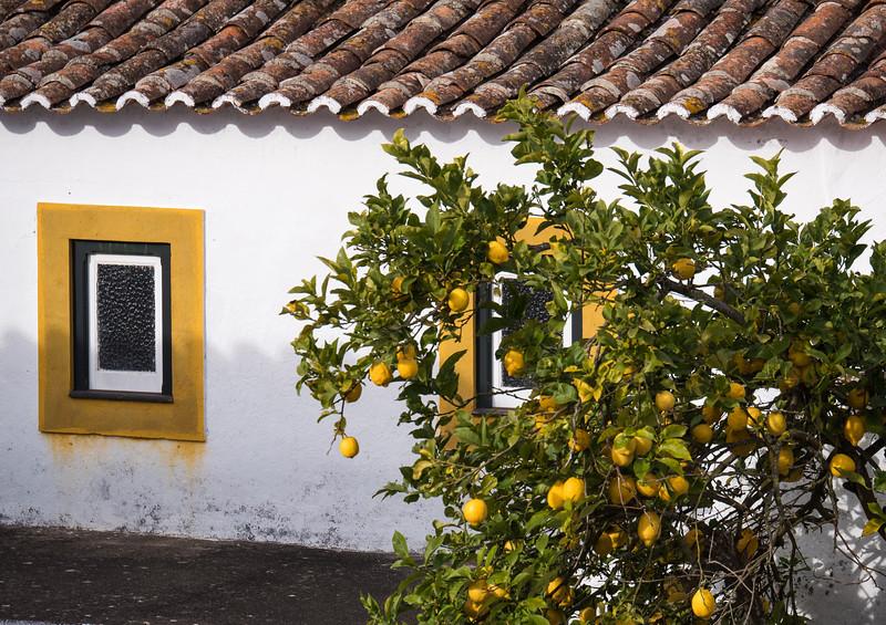 Lemon Tree and Window